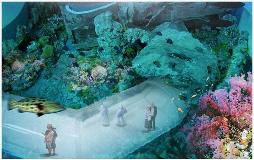 Тропические моря. Подводный тоннель